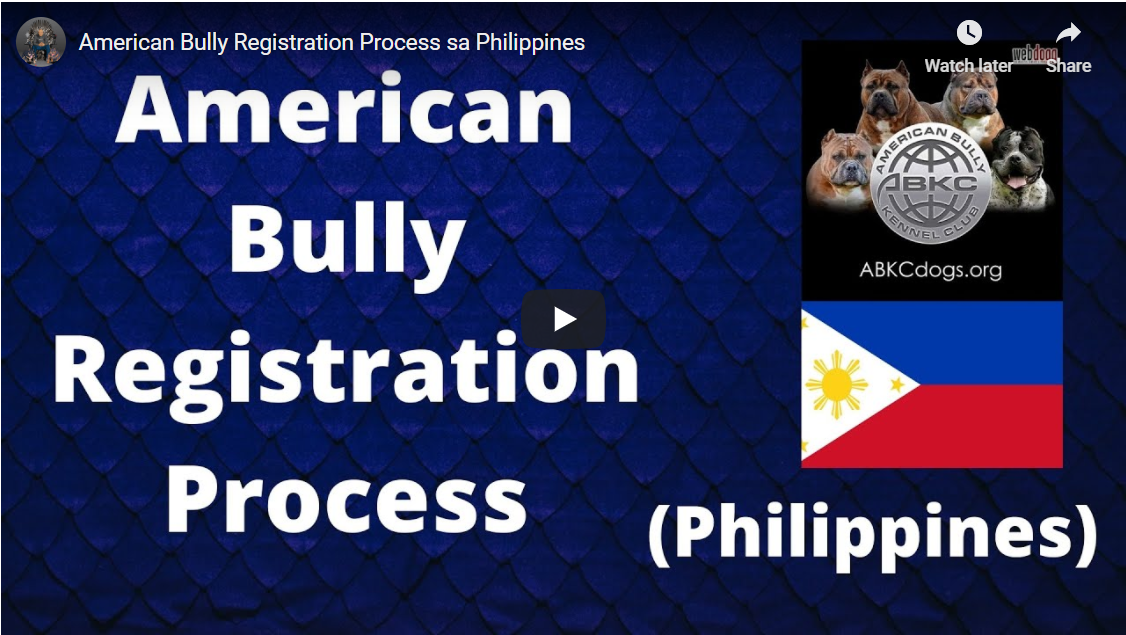 American Bully Registration Process sa Philippines 001